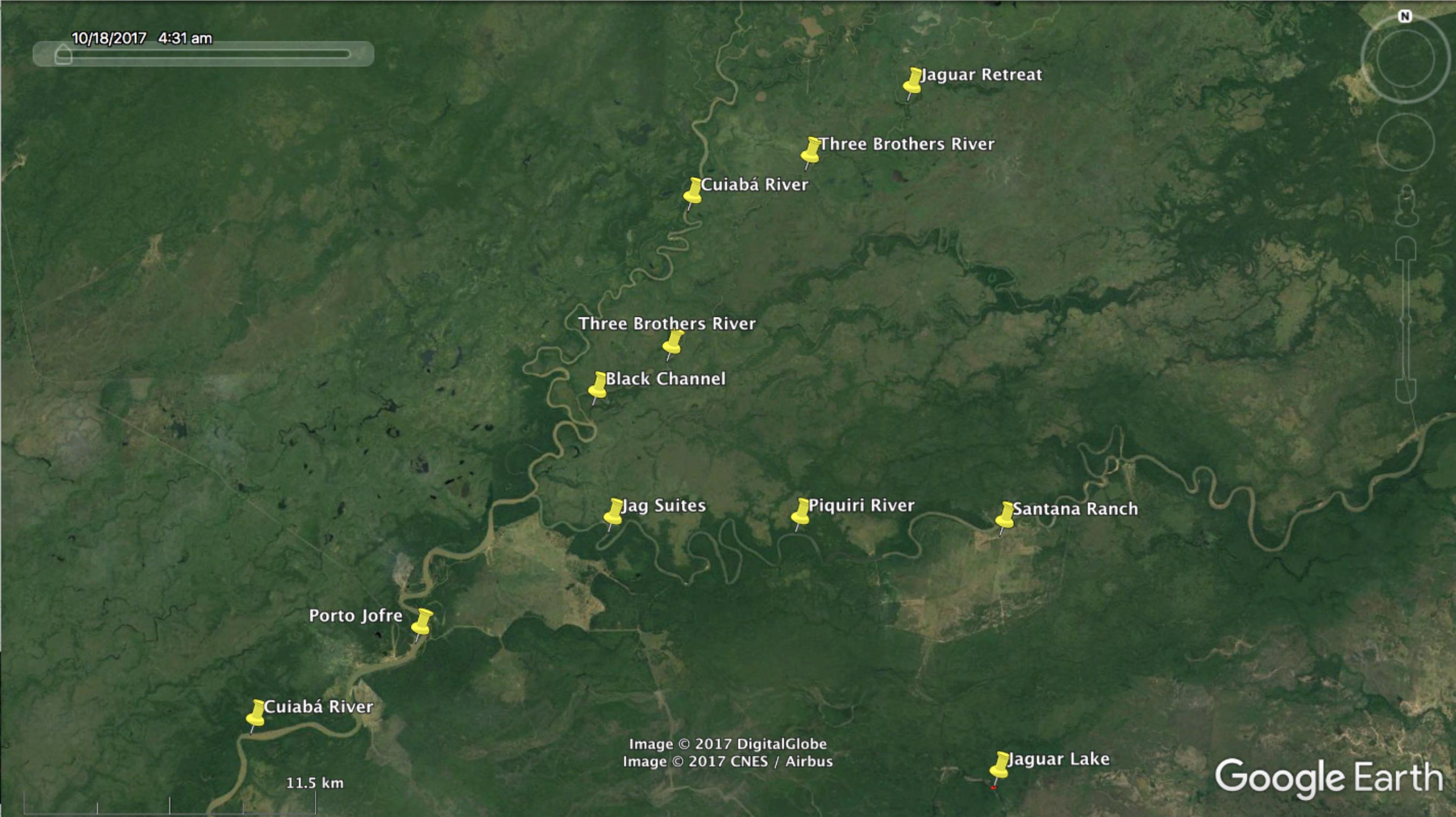 jaguars of brazil u2019s pantanal  wildlife photography tours